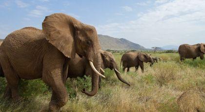 Reiseziel Samburu in Kenia
