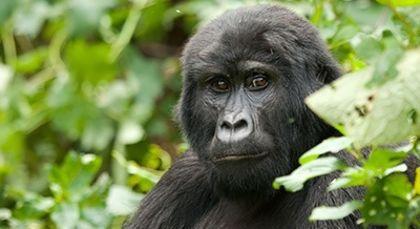 Ruanda in Afrika