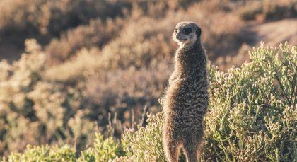 Reiseziel Little Karoo in Südafrika