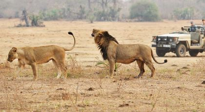 Reiseziel Ruaha in Tansania