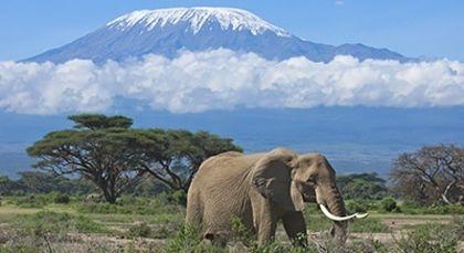 Tansania Urlaub in Afrika