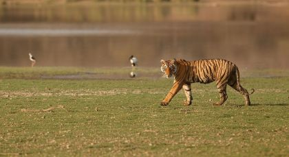 Bandhavgarh in Nordindien
