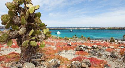 Reiseziel Santa Cruz in Ecuador/Galapagos