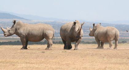 Reiseziel Laikipia in Kenia