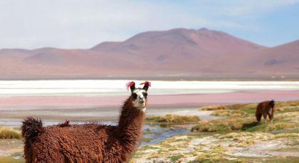 Ojo de Perdiz in Bolivien