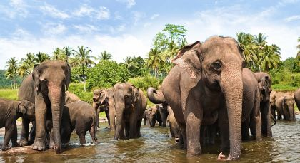 Reiseziel Yala in Sri Lanka