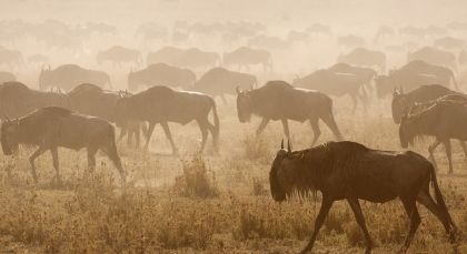 Destination Serengeti (Central) in Tanzania