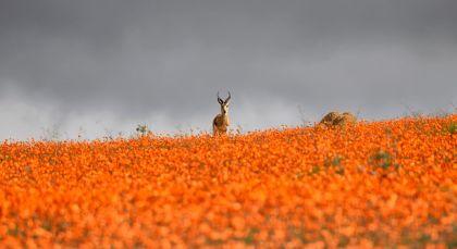 Namaqualand in Südafrika