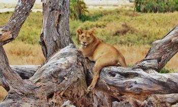 an animal sitting on a rock