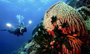 Diving Palawan