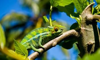 a lizard on a branch