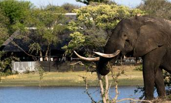 a small elephant standing next to a body of water