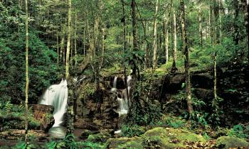 a waterfall in a forest