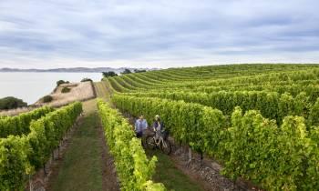 Vineyard, Marlborough