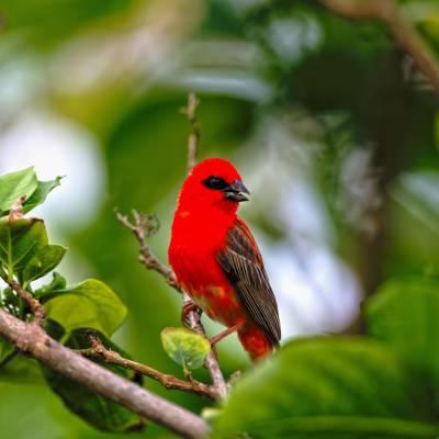 Wildlife, Seychelles