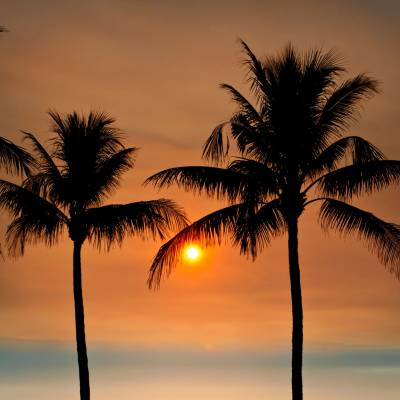 a sunset over a body of water in front of a palm tree