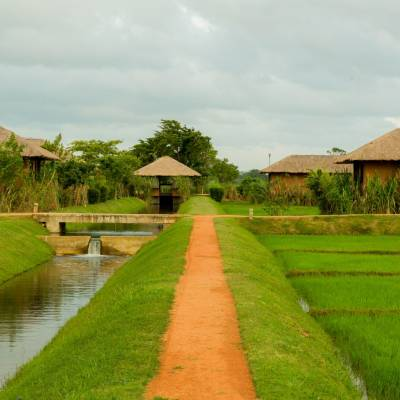 Paddy fields, Water Garden, Sigiriya, Sri Lanka