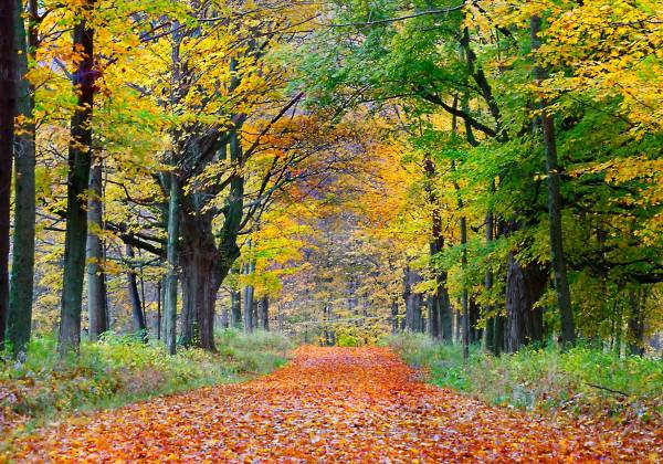 Scenic Fall Road