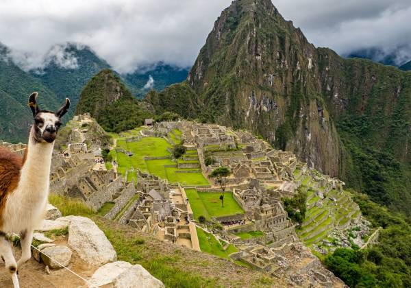 a llama with Machu Picchu in the background