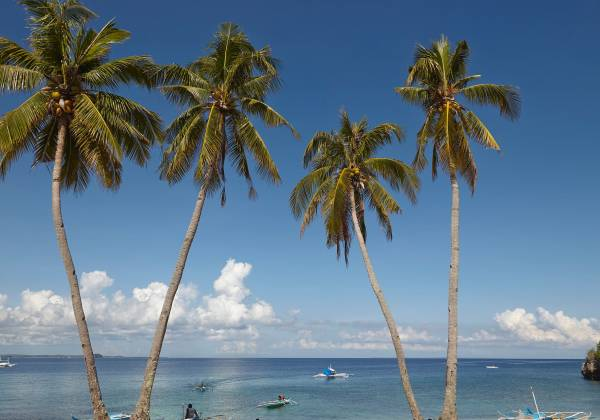 a group of palm trees next to a body of water