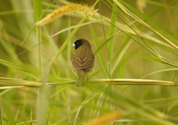 Bird in Ecuador