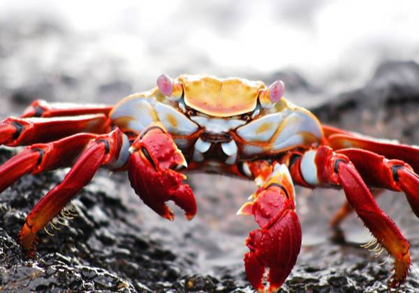 a close up of a crab