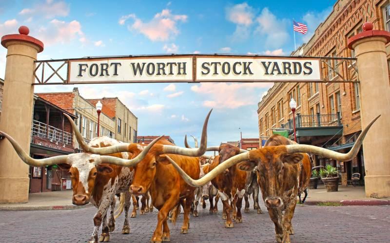 Stockyards Herd