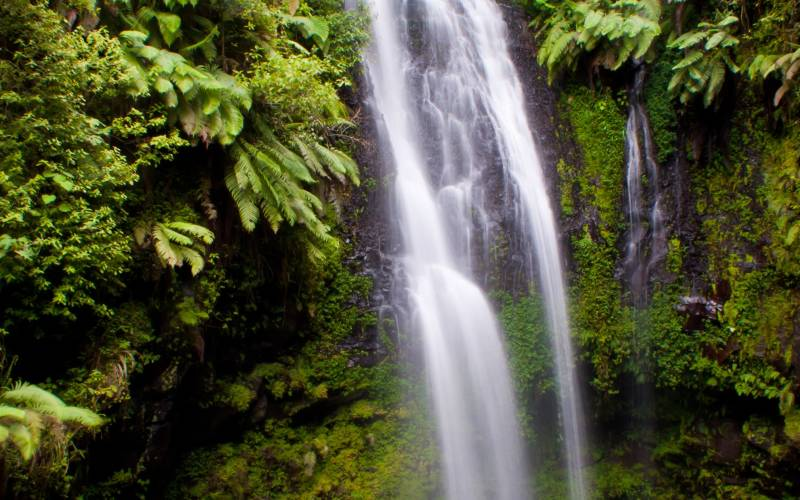 a waterfall surrounded by trees