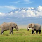 kilimanjaro tours