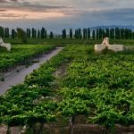 Cavas Wine Lodge Mendoza Argentina Tour