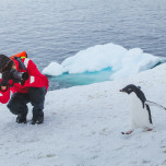 Reisender fotografiert vorbeiwatschelnden Pinguin