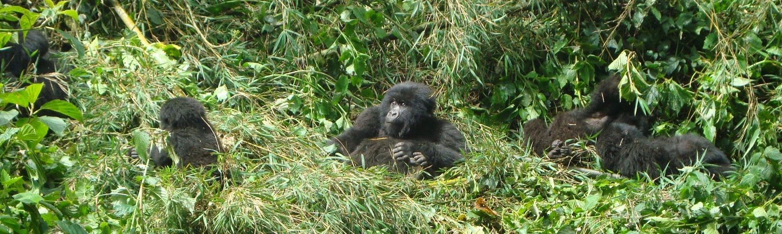 Highlights of Rwanda - Top Five Things to do in Rwanda