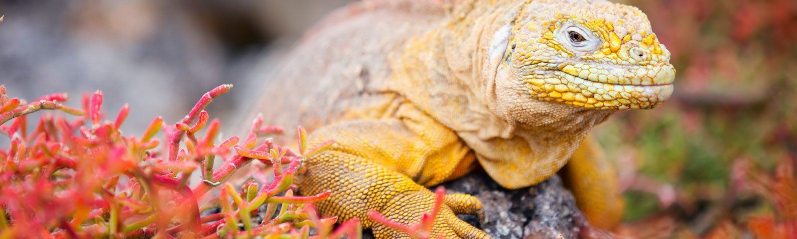 cruise to the galapagos islands