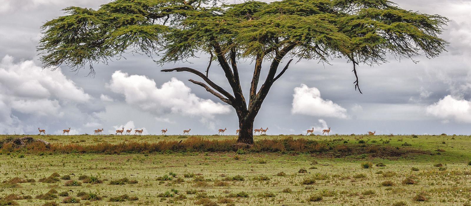 Nairobi - History of Kenya