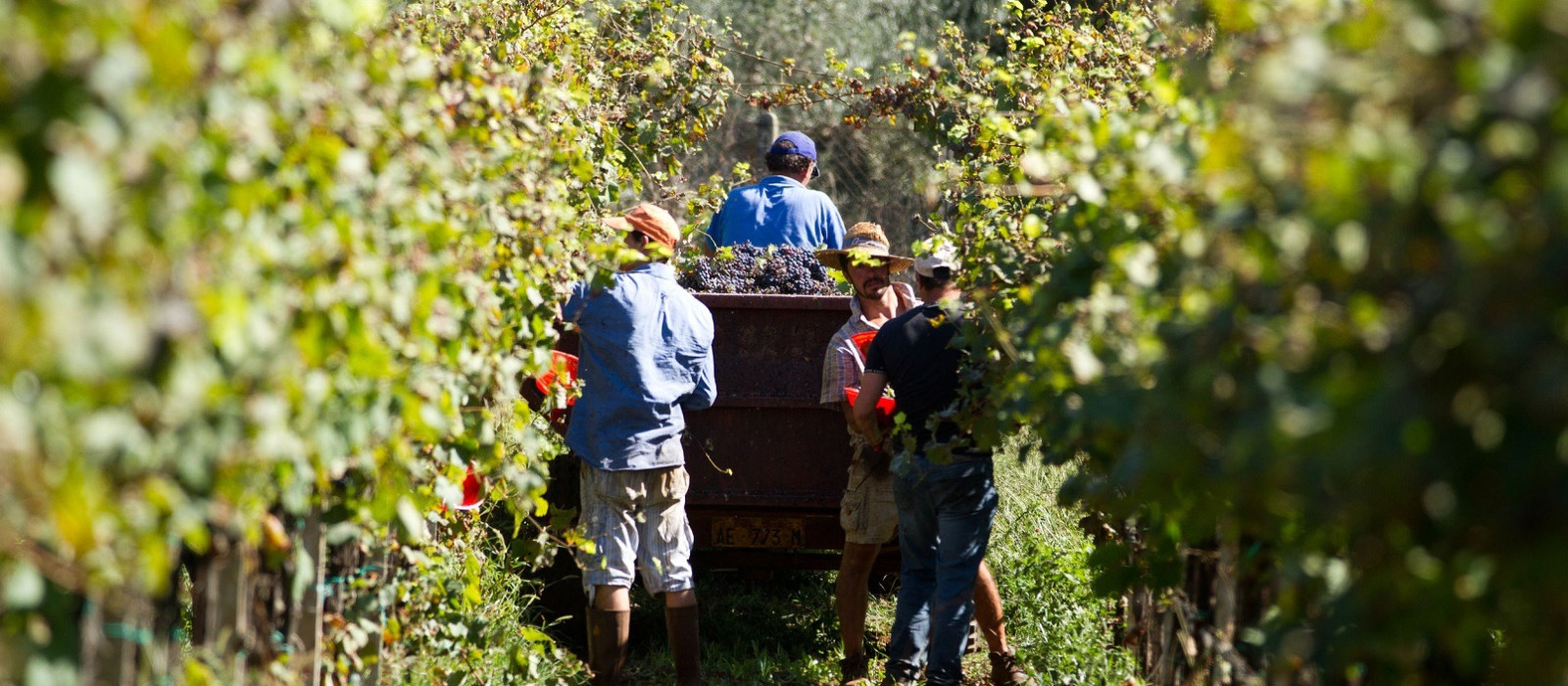 Cuisine in Chile - Chile Vineyard Wine tour with Enchanting Travels