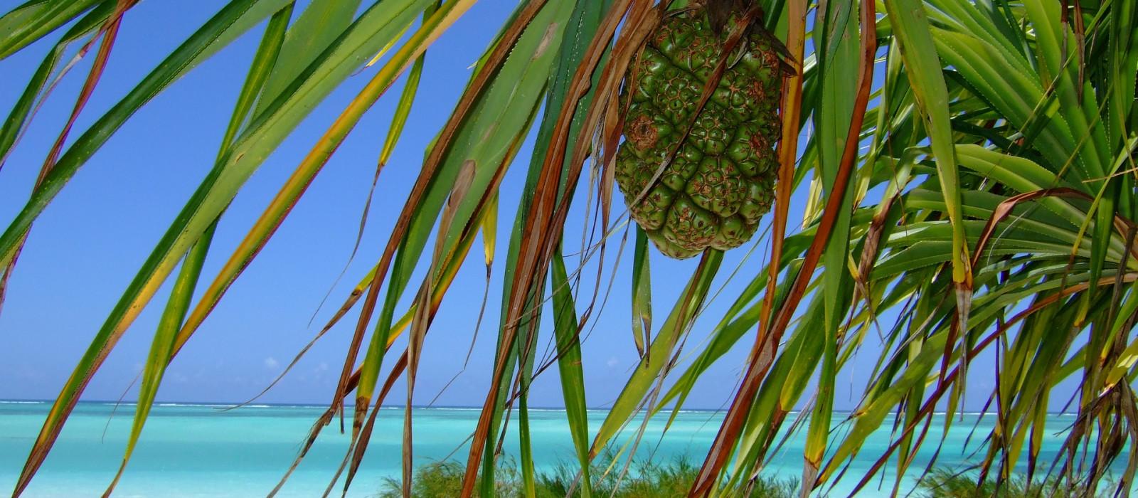 Blick durch Palmenblätter auf türkisblaues Wasser und Sandstrand auf Sansibar, Afrika