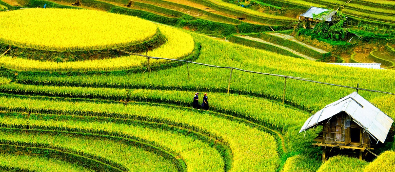 Best time to visit Vietnam - rice fields in Mai chau