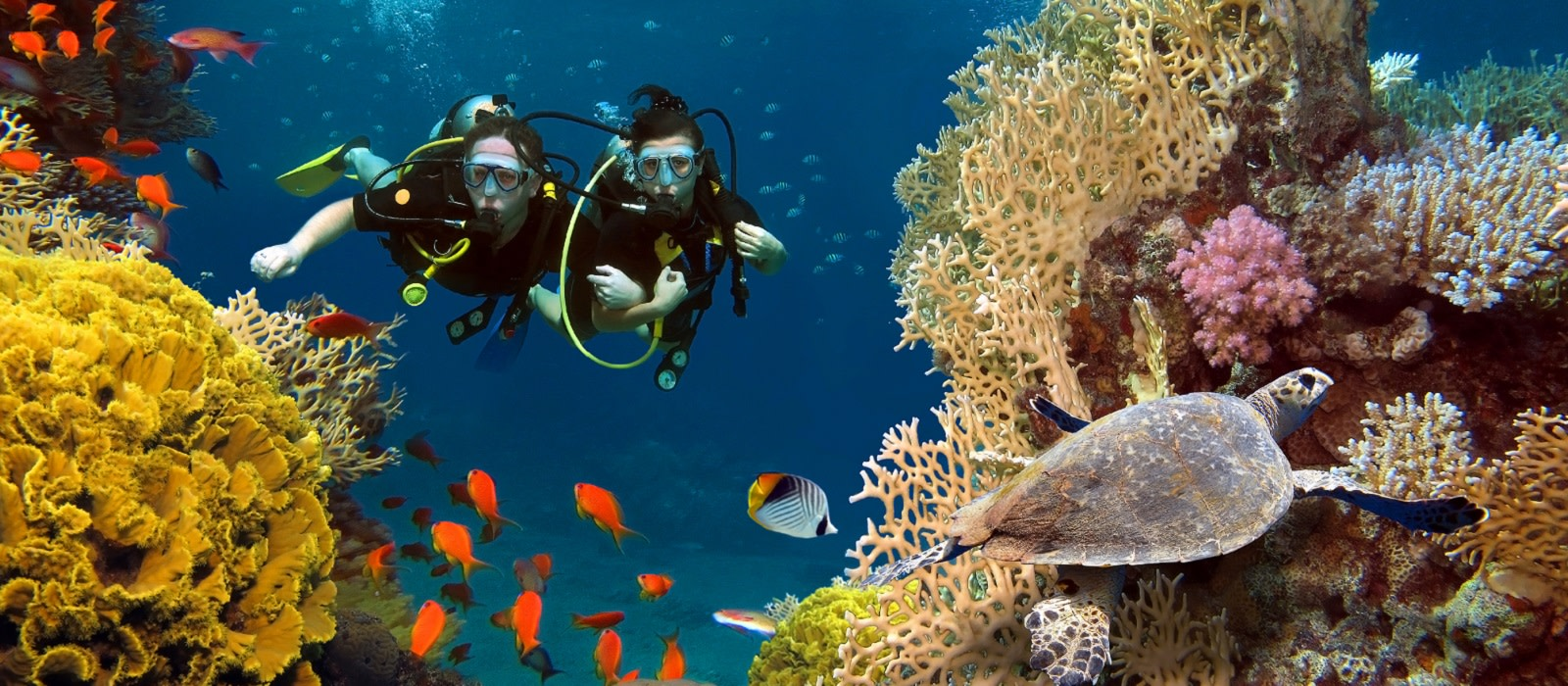 Maldives Scuba Diving Activity