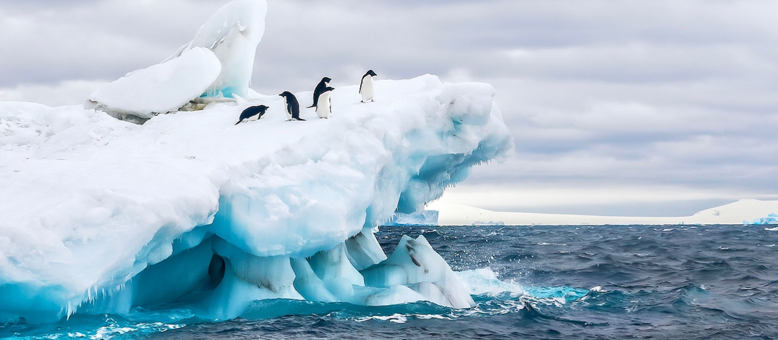 An Antarctica nature scene, with a group of five Adelie penguins on a floating iceberg in the icy cold waters of the Weddell Sea, near the Tabarin Peninsula, Antarctica