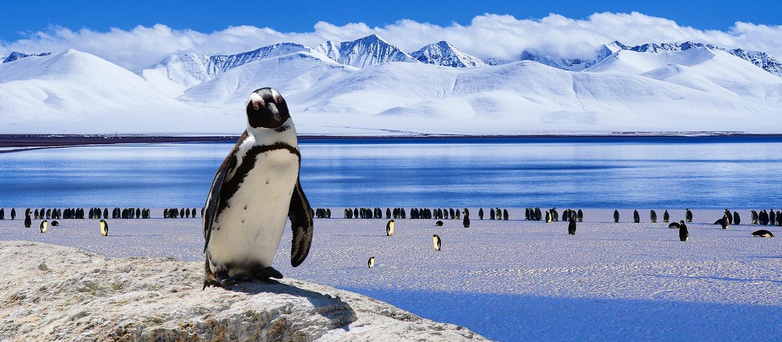 Pinguin auf einem Stein vor Gruppe von Pinguinen im Hintergrund am Strand der Antarktis