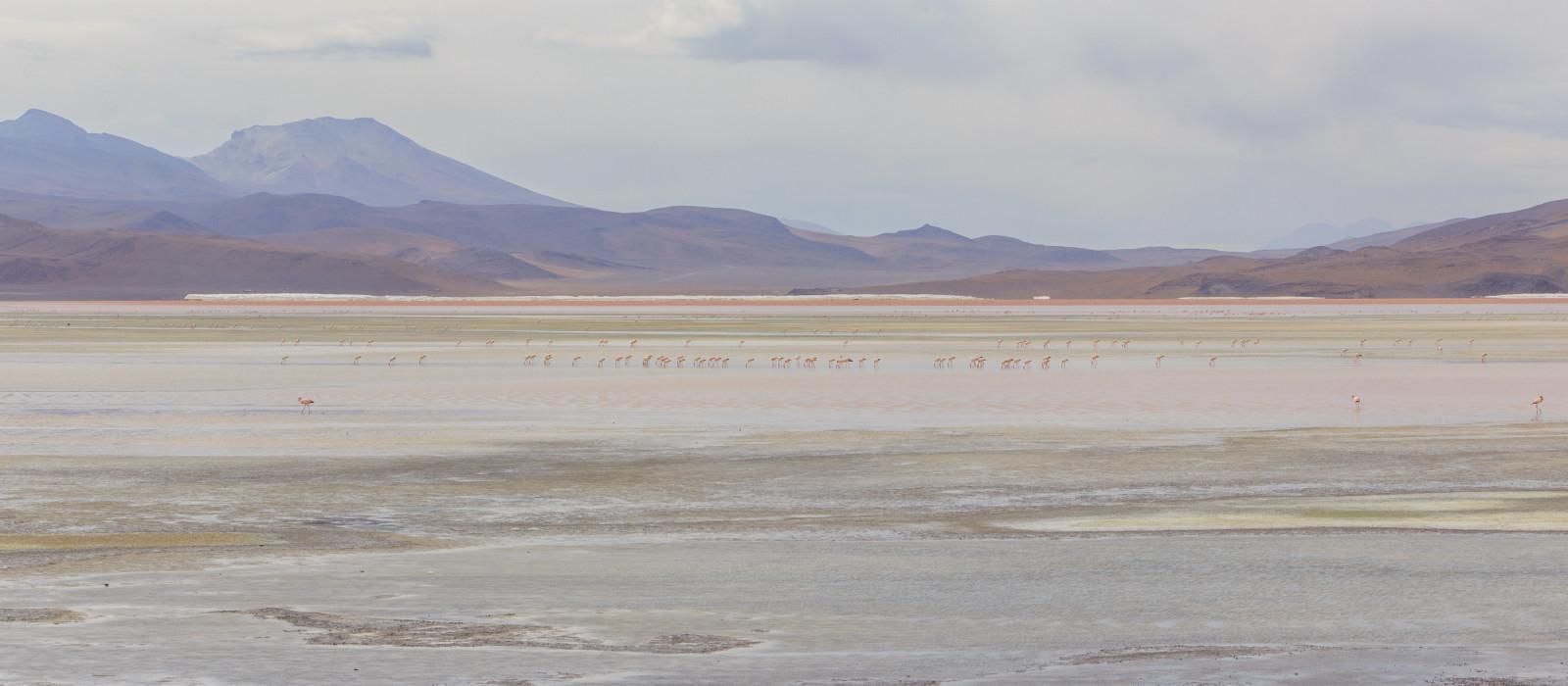 Bunter See Laguna Colorada im Salar de Uyuni, Bolivien, Südamerika