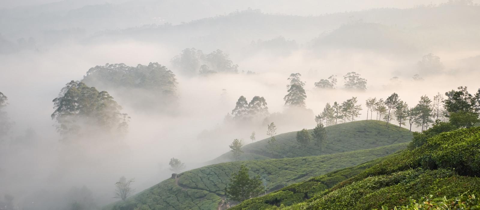 Best view of Munnar, Kerala, India