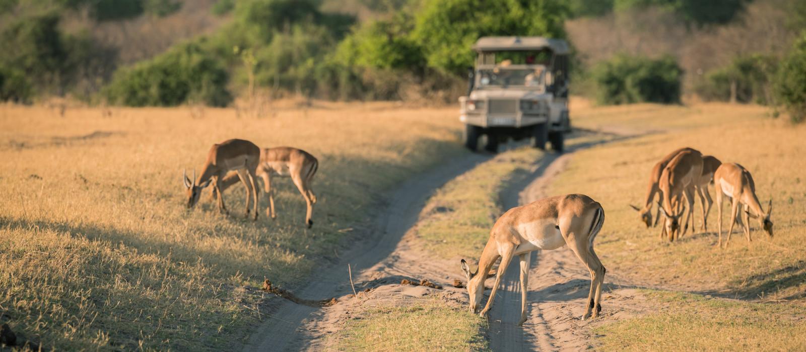 Game Safari, Hirsche, Malawi, Afrika