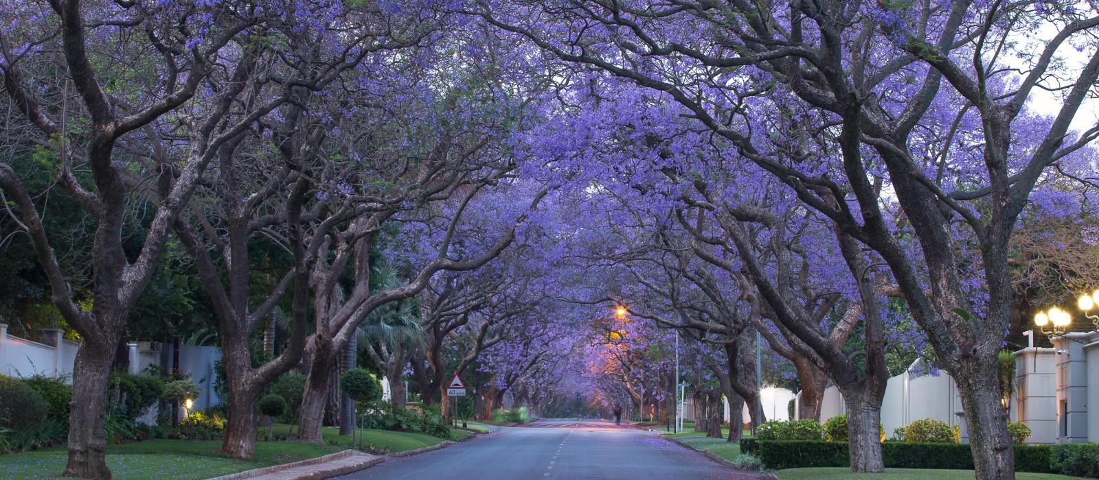 Straßen von Johannesburg, Südafrika