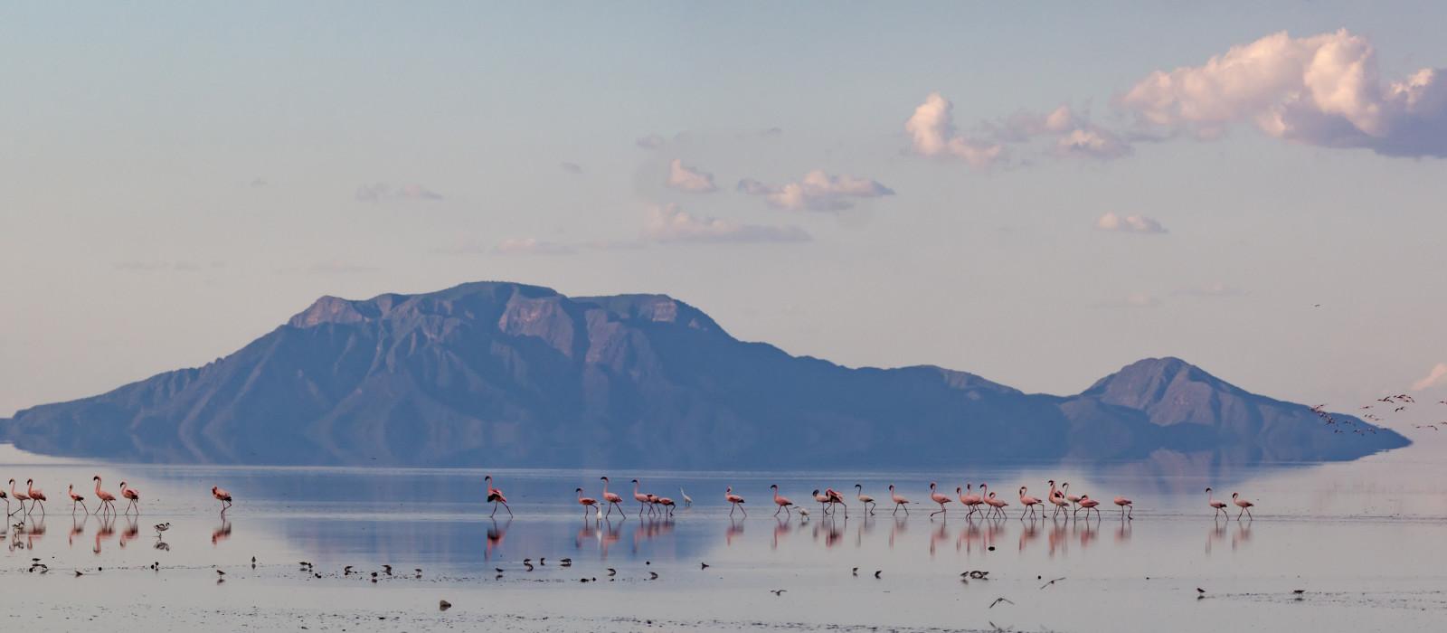 Flamingos at Lake Natron, Tanzania, Africa