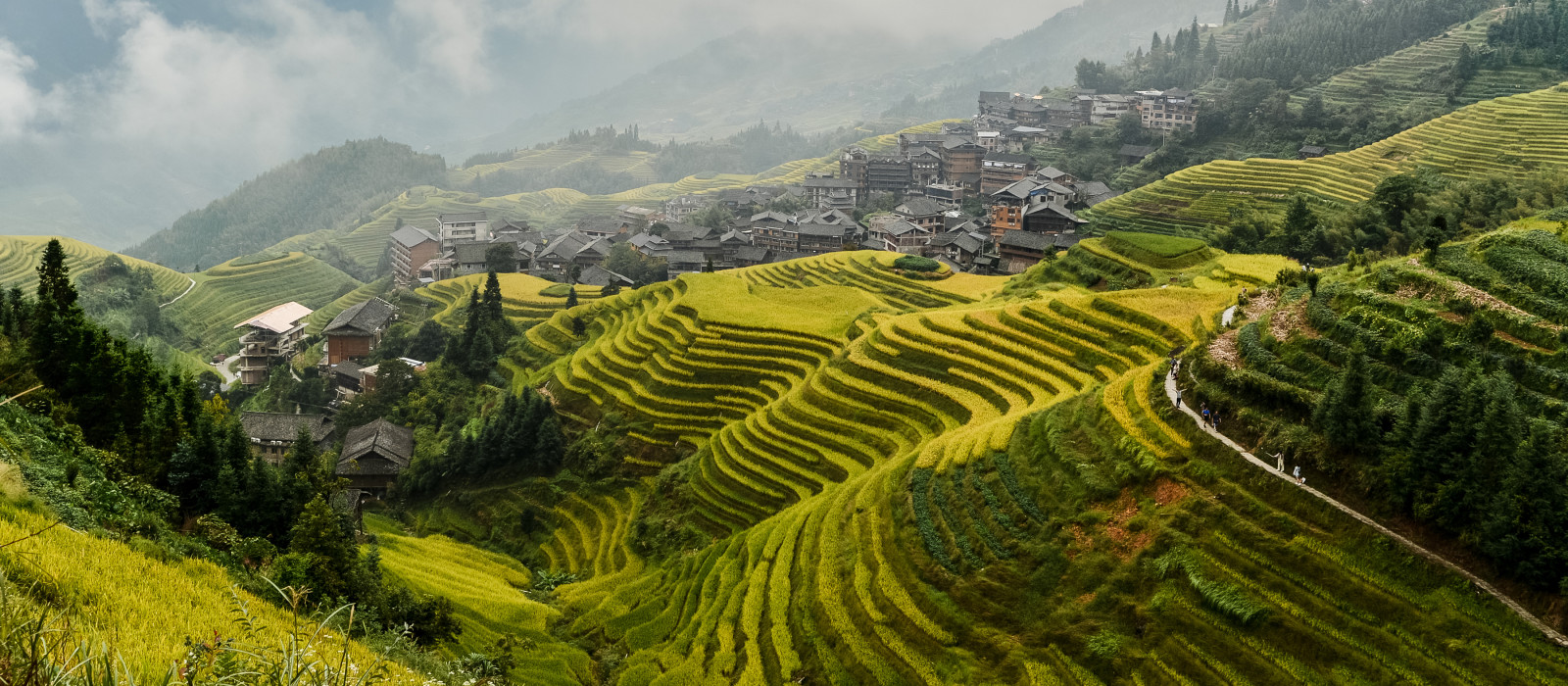 View of ripen rice terraces in Guilin, China, in harvest time. Clouds above rice terrace and mountains village on the right