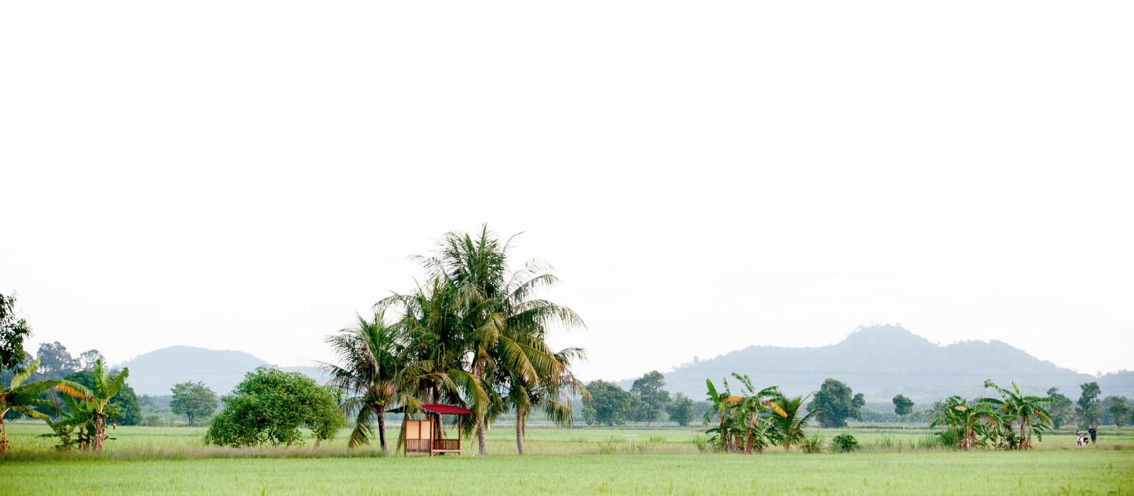 Panoramaaufnahme, Landschaft des Reisfeldes in Malaysia, Asien