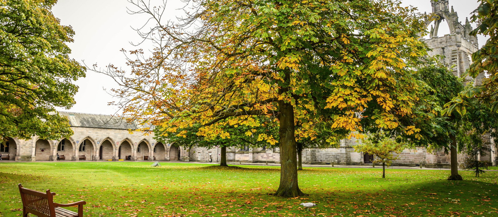 Peaceful and lonely background of autumn park in Aberdeen, Scotland, United Kingdom