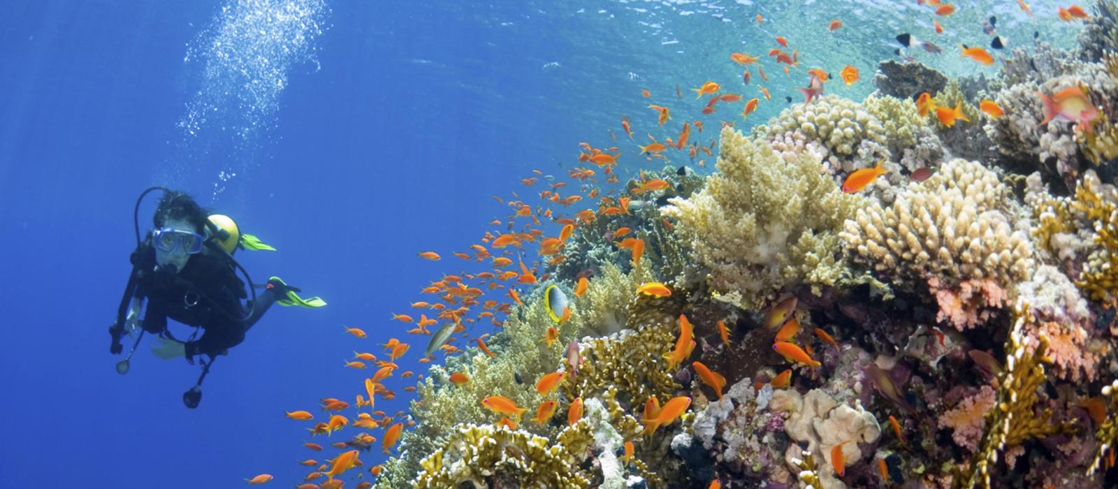 Highlight auf Ihrem Fidschi Urlaub: Schnorcheln in Korallenriffen