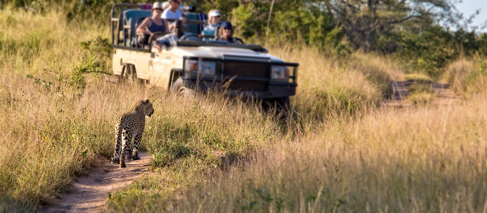 Side view of tourists in jeep looking at cheetah lying